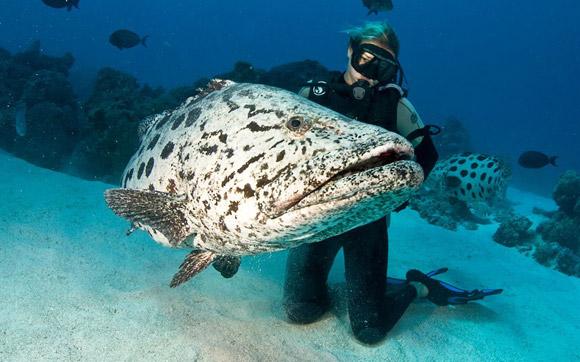 玩转海底世界,大堡礁最佳潜水地全搜罗