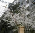 花园新村,杭州花园新村二手房租房