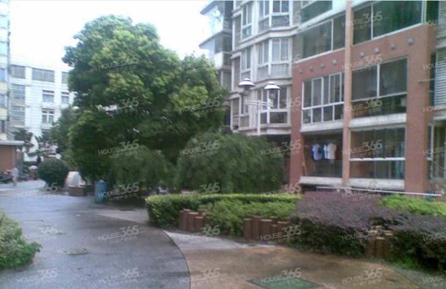 美丽嘉园 中心位置 三2厅2卫 400万买奥体三房 金中北小学区